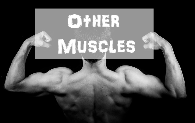 Train Other Muscles Calisthenics